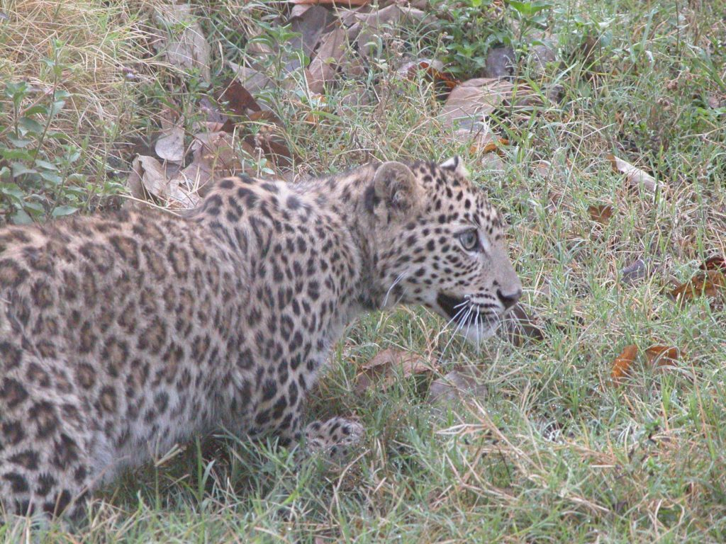 Bardiya national park (49)