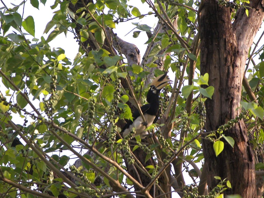 Bardiya national park (5)