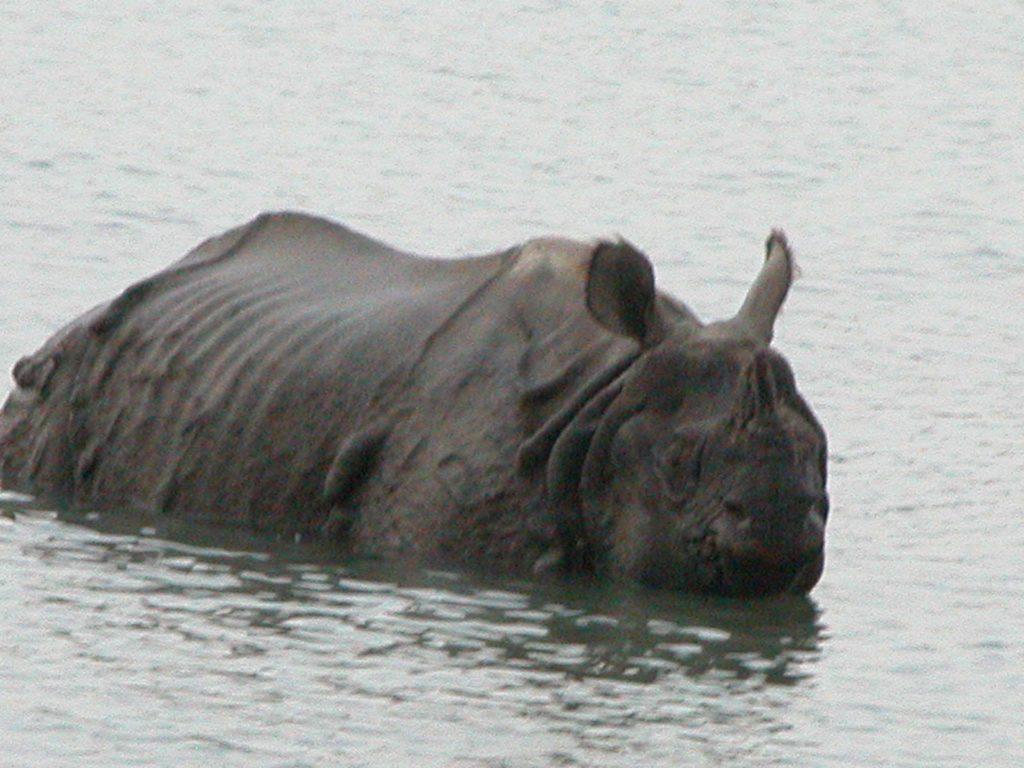 Bardiya national park (53)