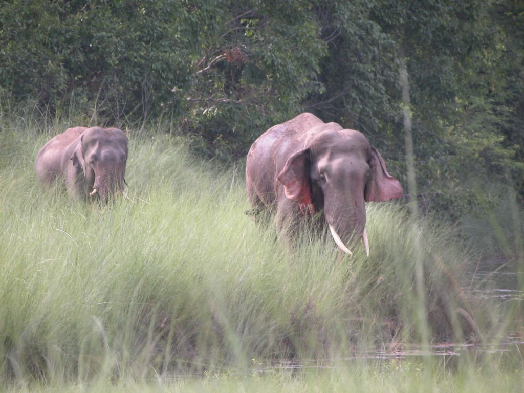 Bardiya national park (57)
