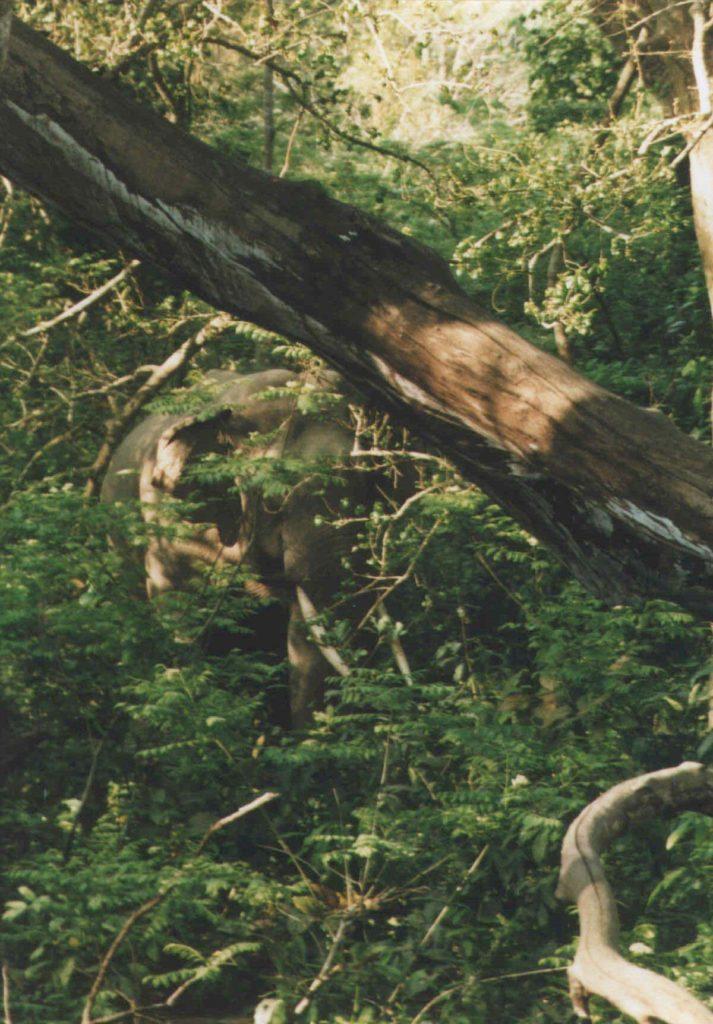 Bardiya national park (59)
