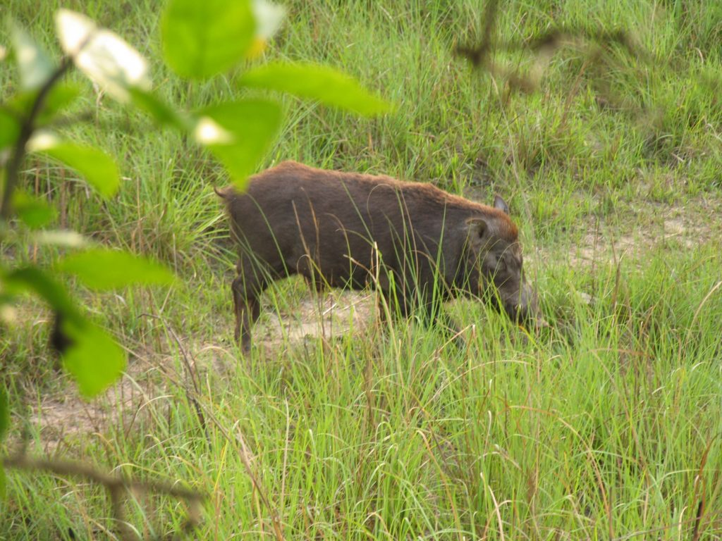 Bardiya national park (6)