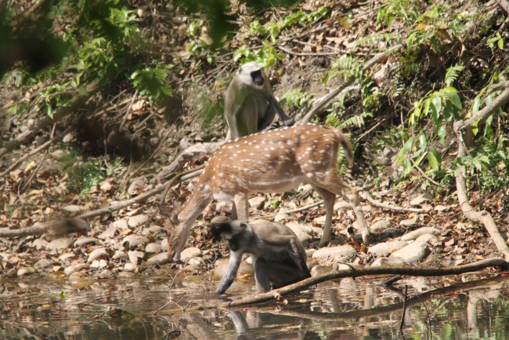 Bardiya national park (60)