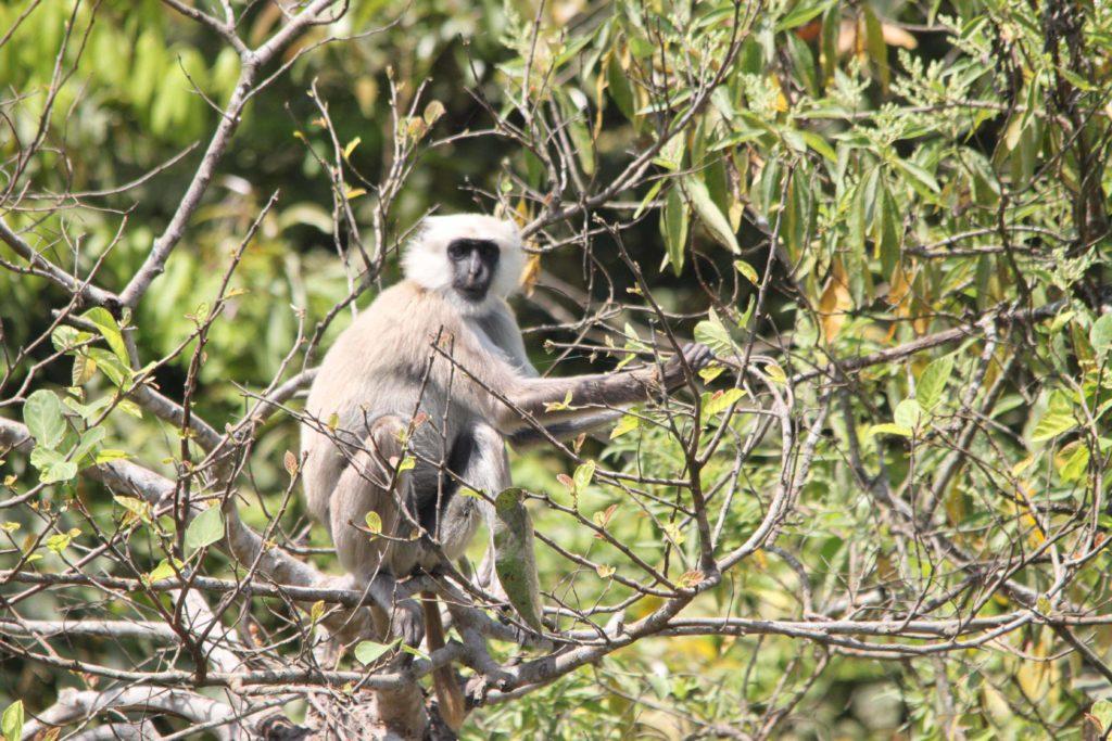 Bardiya national park (62)