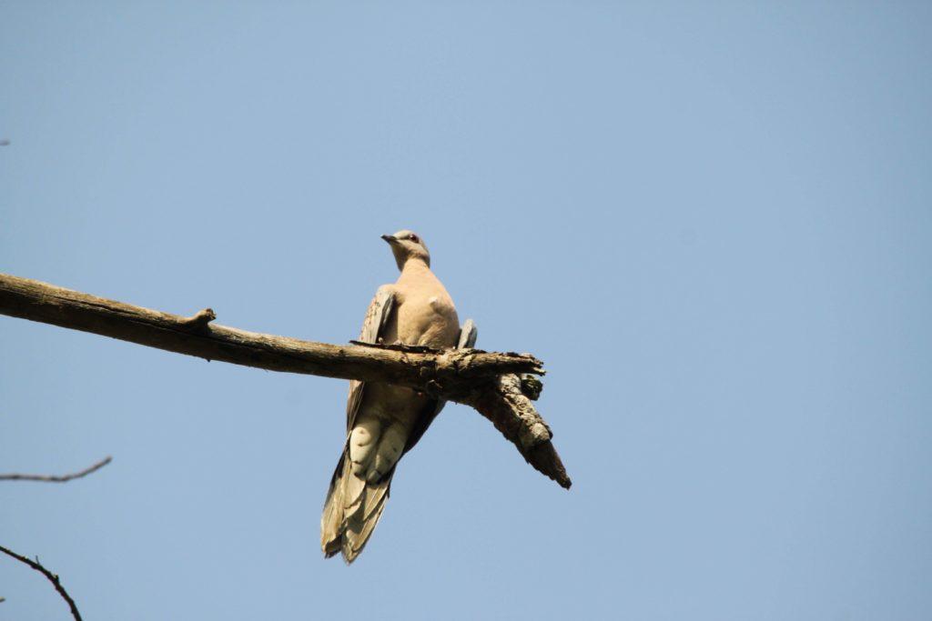 Bardiya national park (63)