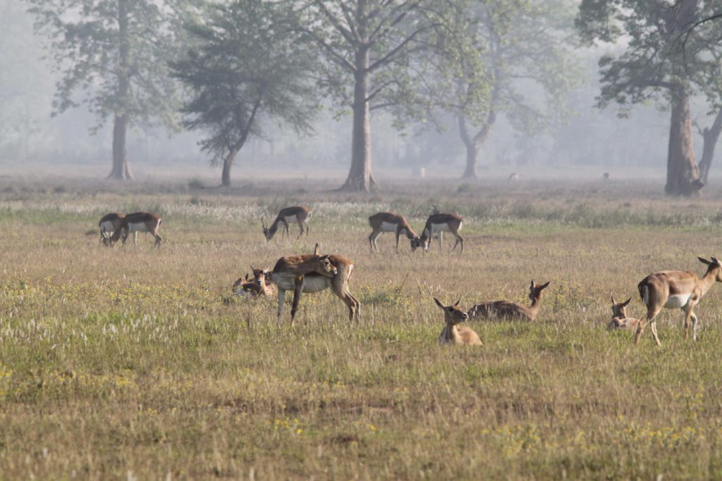 Bardiya national park (65)
