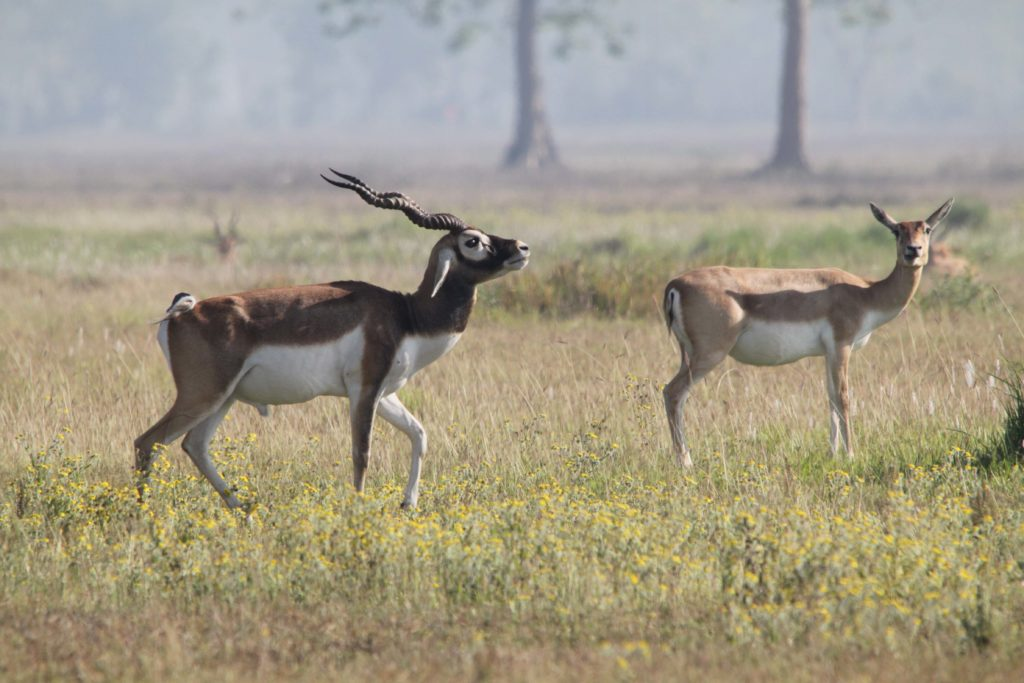 Bardiya national park (66)