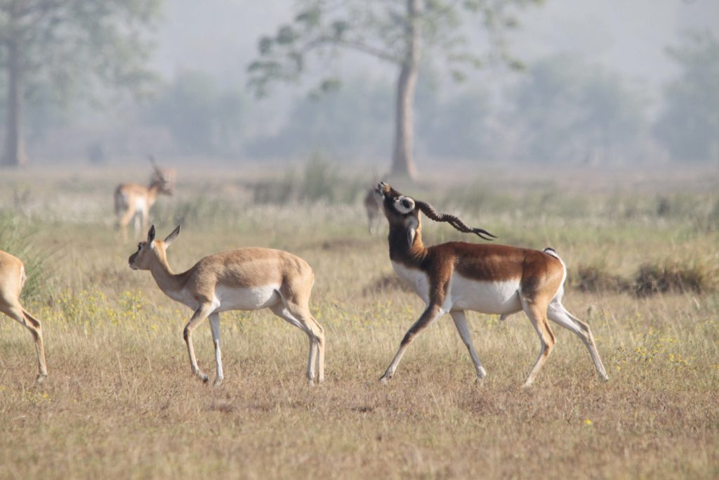 Bardiya national park (67)