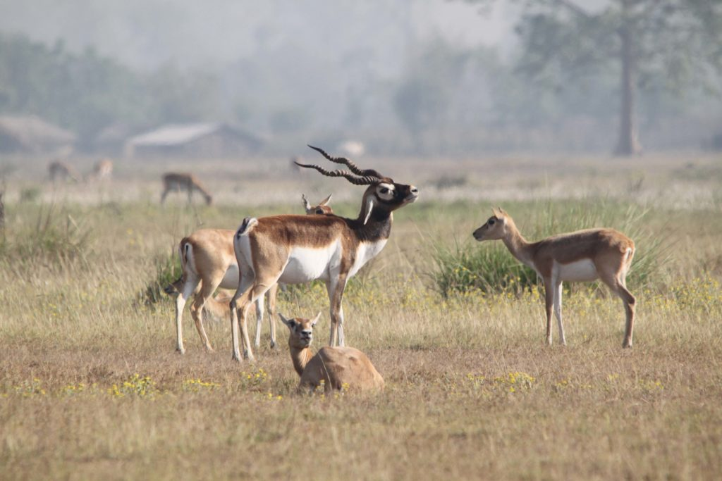 Bardiya national park (68)