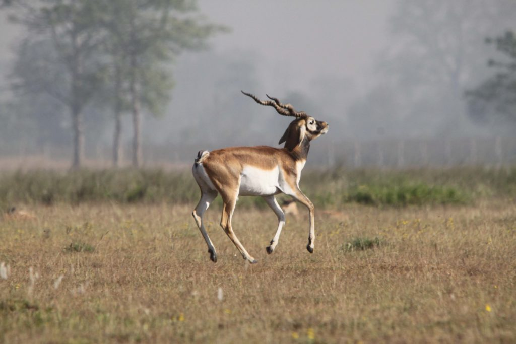 Bardiya national park (69)