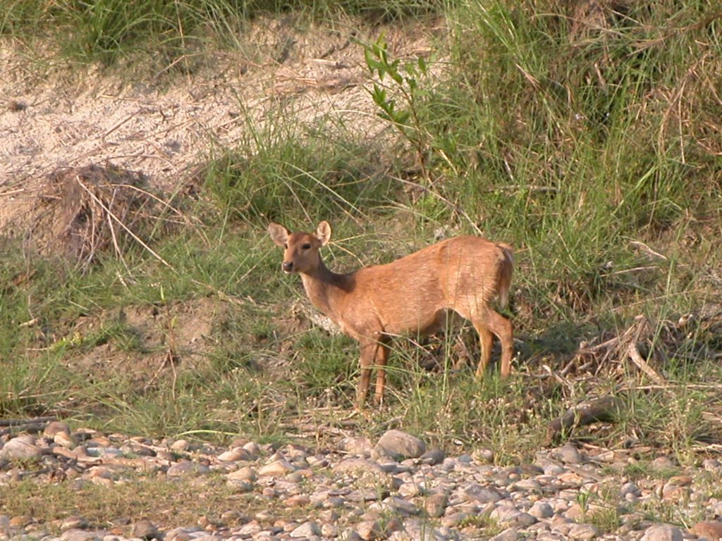 Bardiya national park (7)