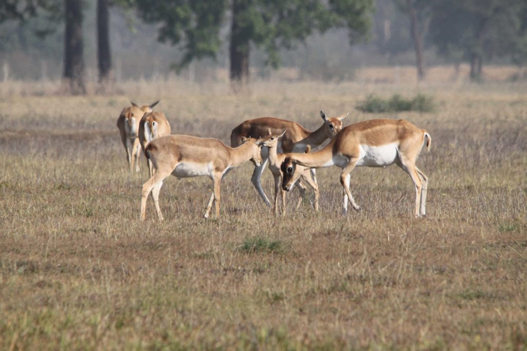 Bardiya national park (70)