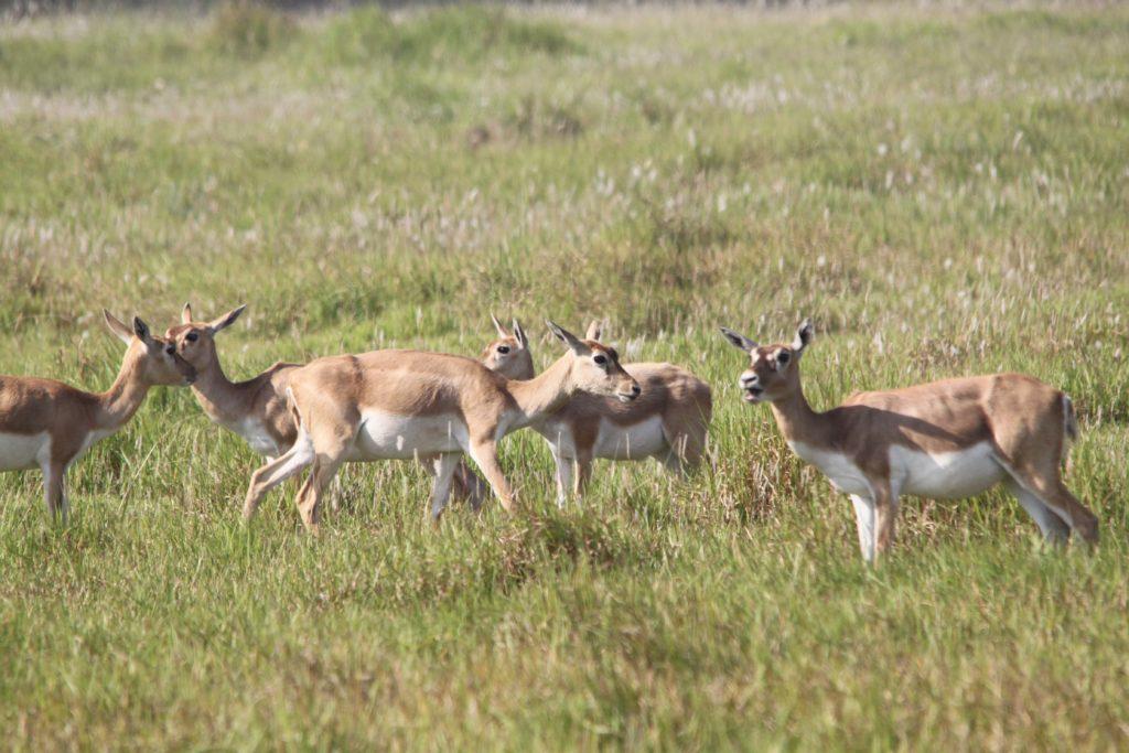 Bardiya national park (72)