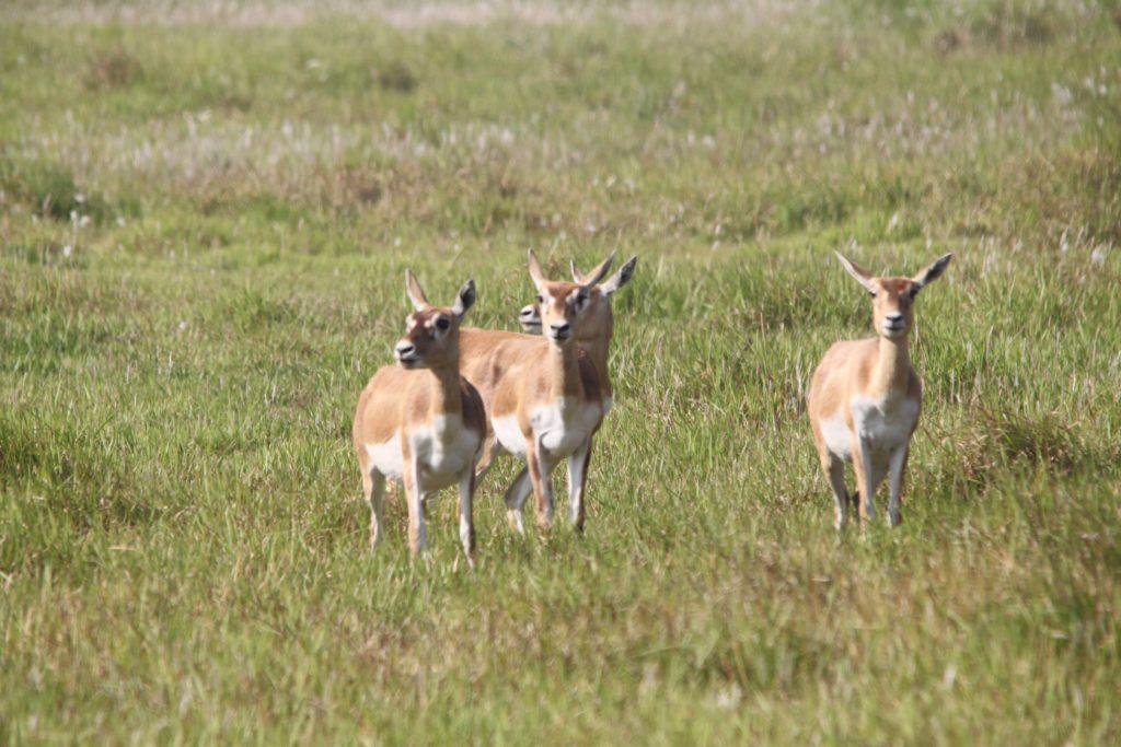 Bardiya national park (73)