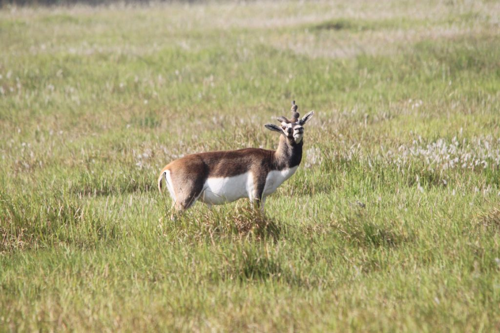 Bardiya national park (74)