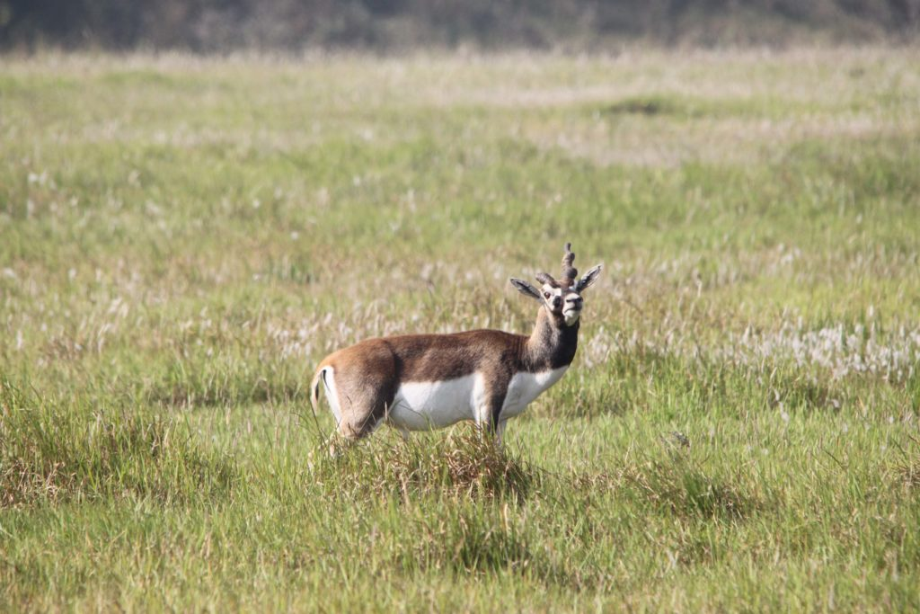 Bardiya national park (75)