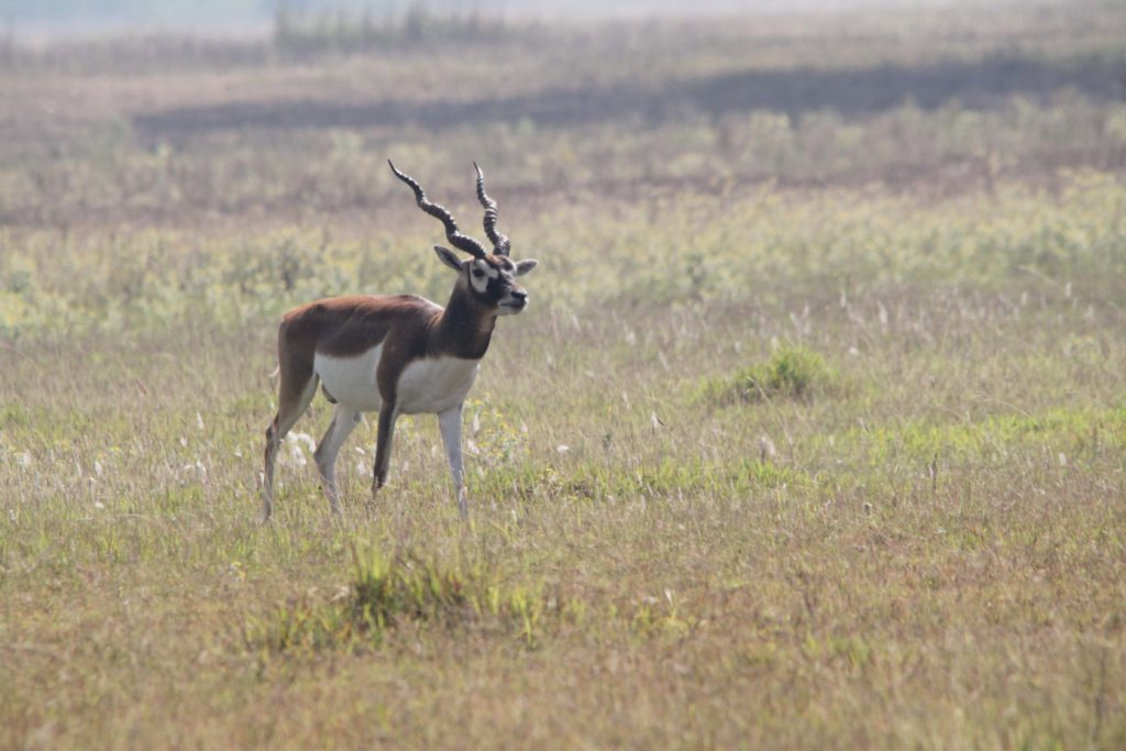 Bardiya national park (76)