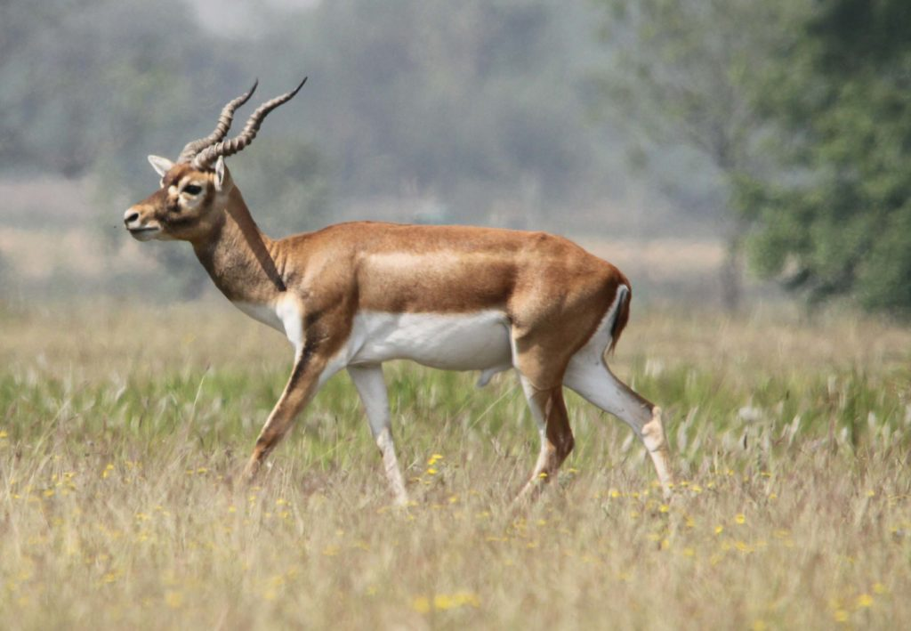 Bardiya national park (82)