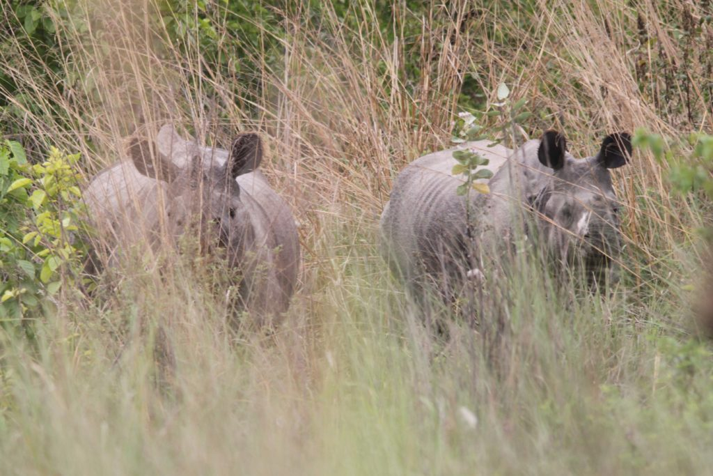 Bardiya national park (85)