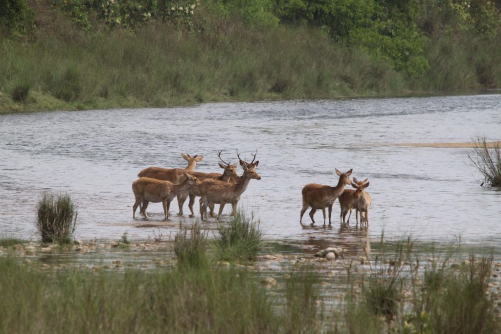 Bardiya national park (87)