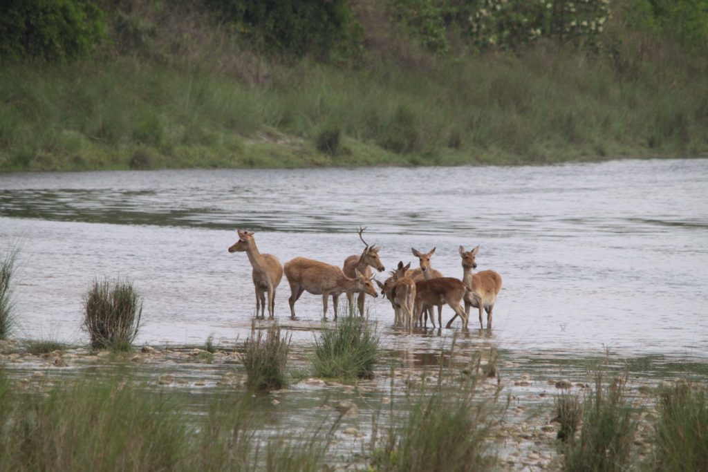 Bardiya national park (88)