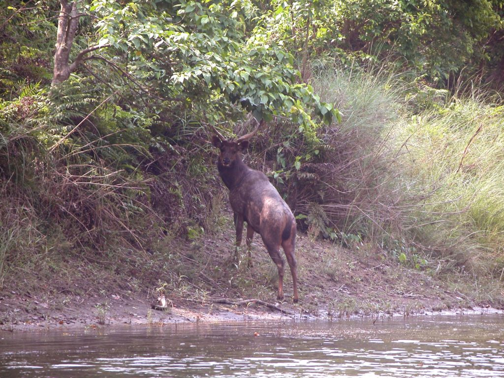 Bardiya national park (9)