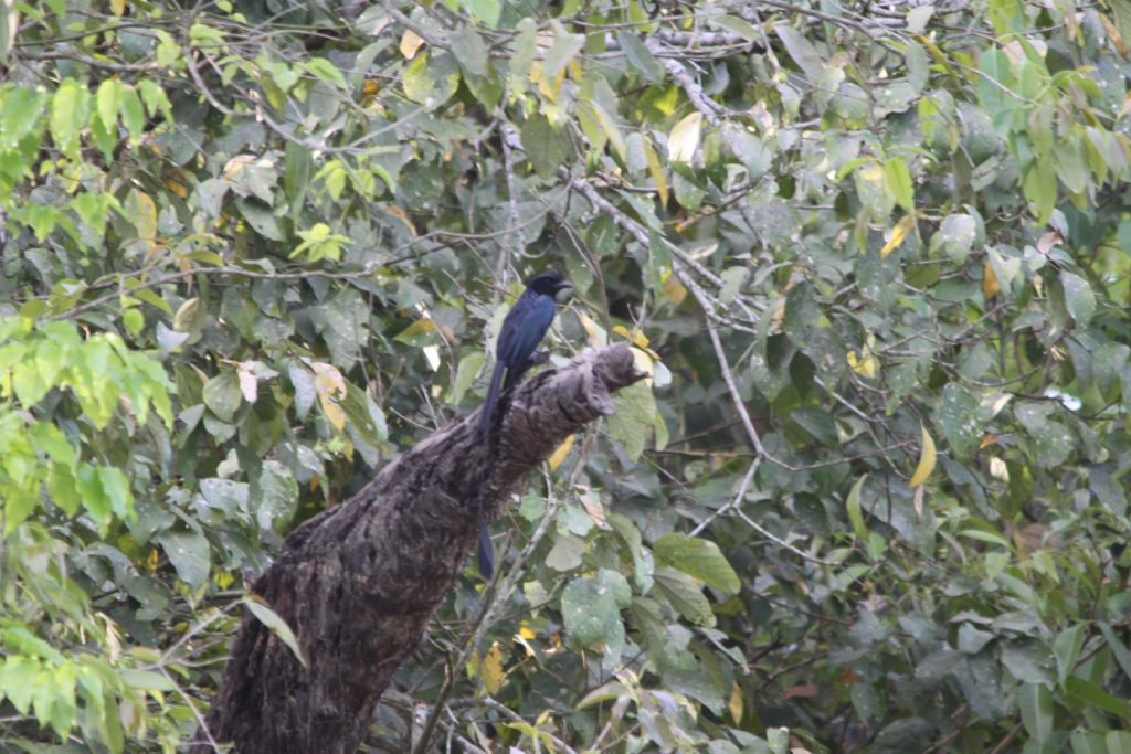 Bardiya national park (93)