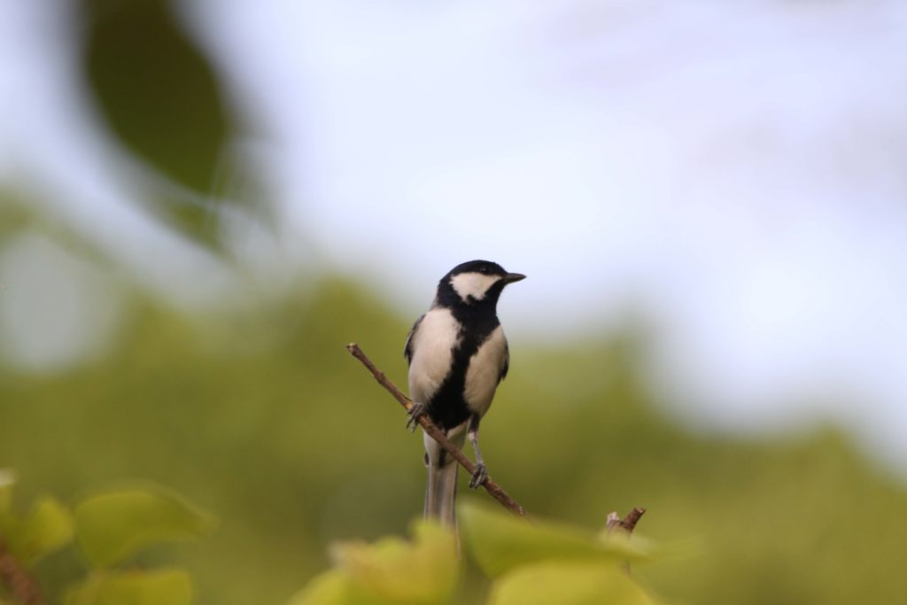 Bardiya national park (95)