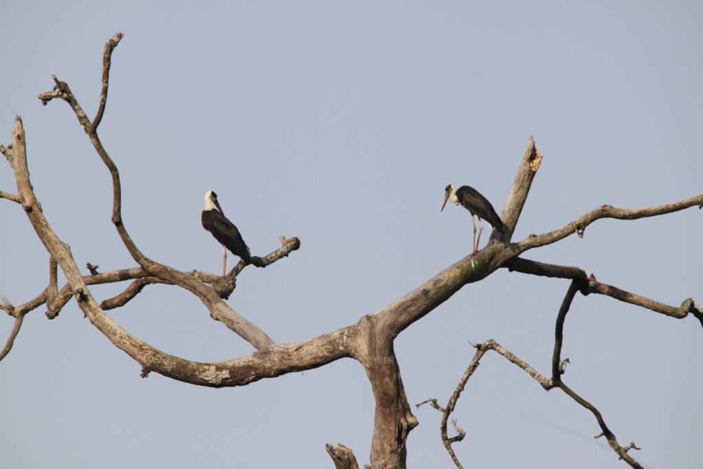 Bardiya national park (97)