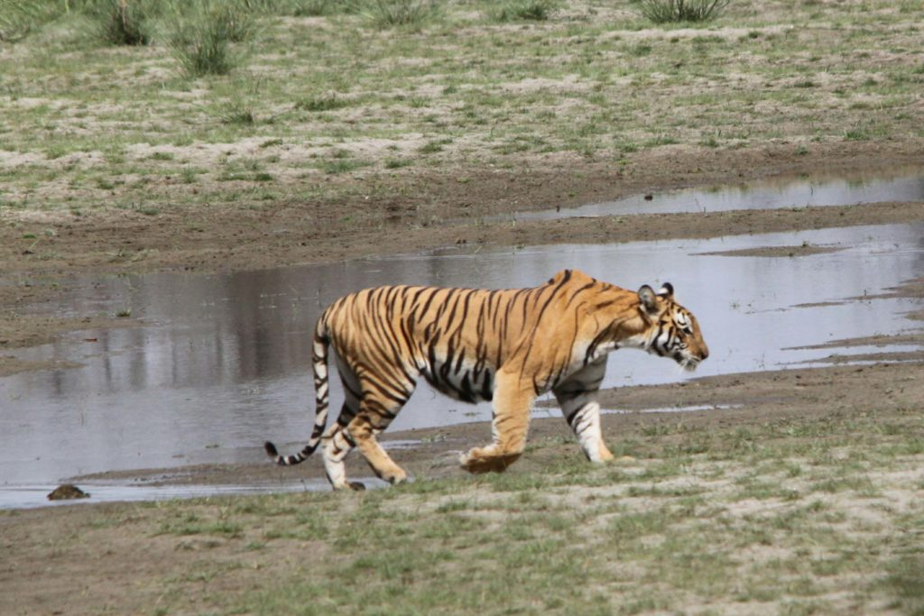 Bardiya national park (99)