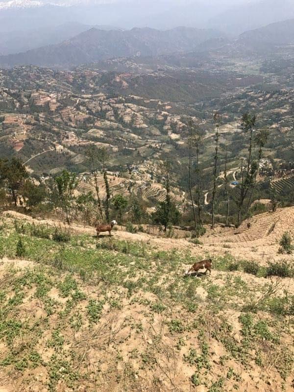 Chisapani hiking (8)