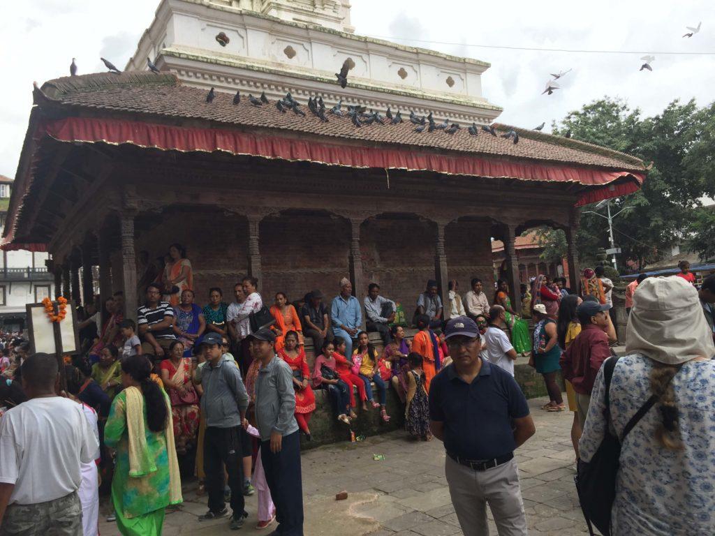 Gai jatra festival tour (29)