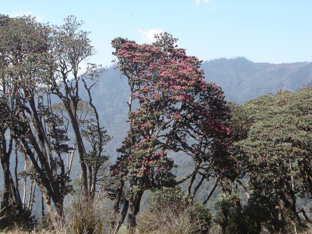 Ghorepani poon hill ghandruk trek (16)