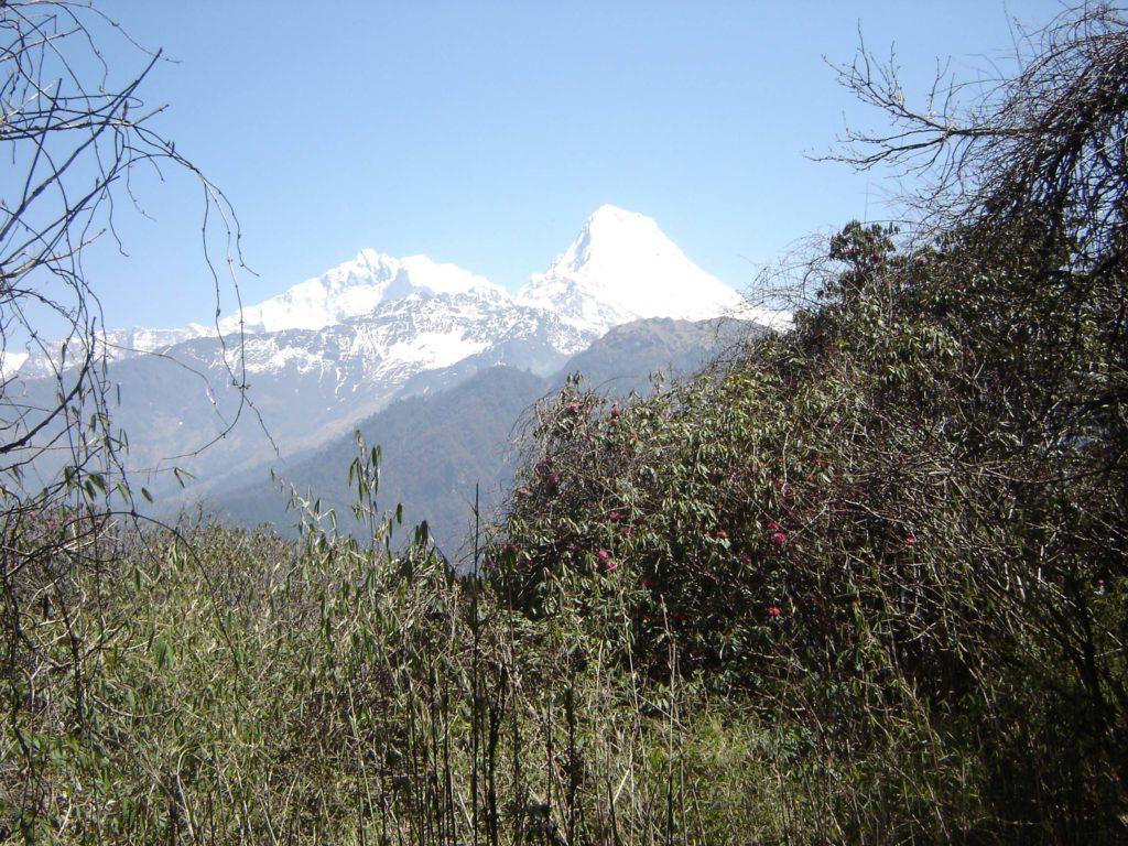Ghorepani poon hill ghandruk trek (19)