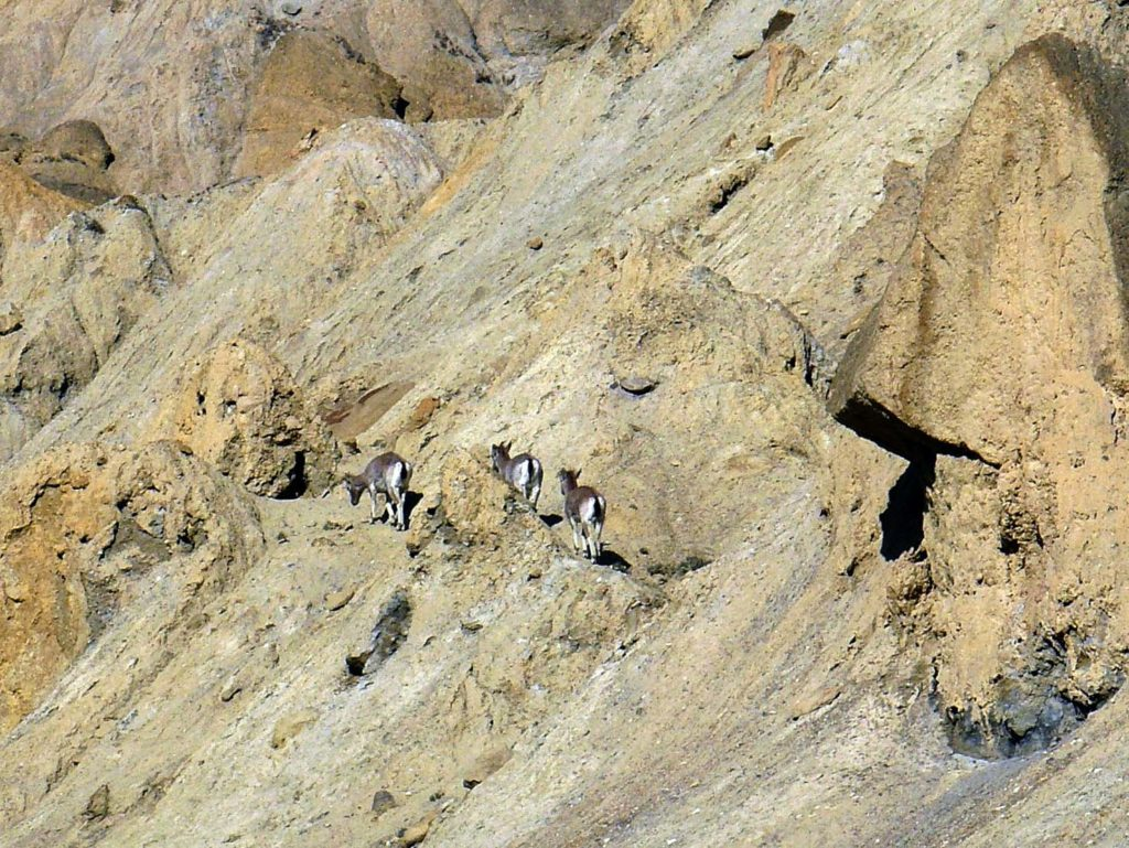 Upper mustang trek in helicopter fly out (23)